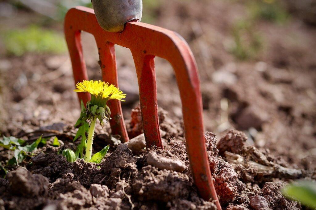 Flower near gardening tool